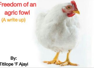 FREEDOM OF AN AGRIC FOWL by TITILOPE 'F AJAYI